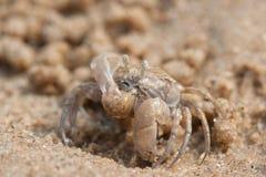 Il granchio del fantasma è sulla spiaggia Fotografie Stock Libere da Diritti