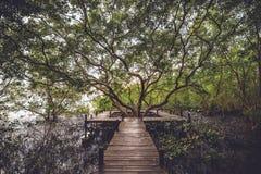 Il grande albero Immagini Stock Libere da Diritti