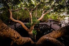 Il grande albero fotografia stock