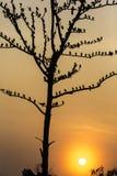 Il grande albero con gli uccelli profila il fondo rosso del cielo dell'alba a Uda Fotografie Stock