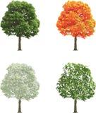 Il grande albero in molla dell'inverno di caduta dell'estate di quattro stagioni ha isolato immagine stock