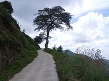 Il grande albero sta da solo immagine stock libera da diritti
