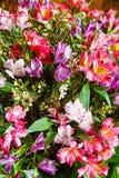 Il grande alstroemeria multicolore fiorisce il mazzo Immagine Stock
