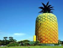 Il grande ananas, azienda agricola della collina di estate Immagini Stock