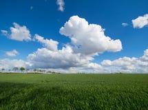 Il grande bianco si rannuvola un prato e un cielo blu verdi Fotografia Stock Libera da Diritti
