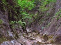 Il grande canyon della Crimea Fotografia Stock