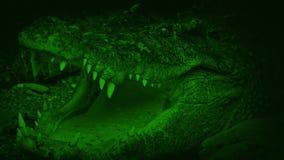 Il grande coccodrillo di Nightvision apre la bocca archivi video