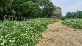 Il grande ` di Pedra del Dau del ` nella foresta di Savassona, stante alta in mezzo al campo Immagine Stock Libera da Diritti