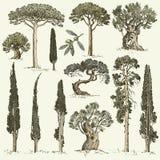 Il grande insieme degli alberi incisi e disegnati a mano include il pino, l'oliva ed il cipresso, oggetto della foresta dell'albe illustrazione vettoriale