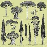 Il grande insieme degli alberi incisi e disegnati a mano include il pino, l'oliva ed il cipresso, oggetto della foresta dell'albe illustrazione di stock