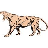 Il grande leone rugge fortemente Fotografie Stock