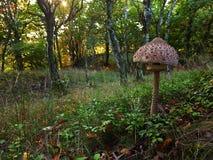 Il grande Macrolepiota variopinto Procera in foresta Fotografia Stock