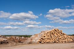 Il grande magazzino di sorbo e del mucchio della betulla stasked collega la priorità alta Immagini Stock