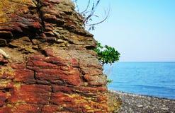 Il grande primo piano rosso della roccia con una pianta verde contro il mare immagine stock libera da diritti