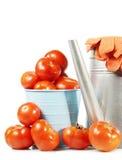 Il grande raccolto dei pomodori freschi isolati su bianco Fotografia Stock