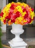 Il grande vaso di fiore è basato su cemento bianco Immagini Stock