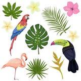 Il grande vettore ha messo con gli uccelli e le piante tropicali illustrazione di stock