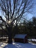 Il grandi albero e granaio al tramonto un giorno di inverno Immagine Stock Libera da Diritti