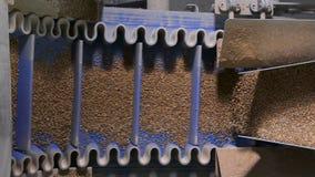 Il grano del grano saraceno si sbriciola nelle parti uguali in una macchina automatica moderna video d archivio