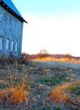 Il grano dorato nella scena del granaio accende la vista rurale fotografia stock libera da diritti