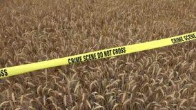 Il grano e la scena del crimine non attraversano archivi video