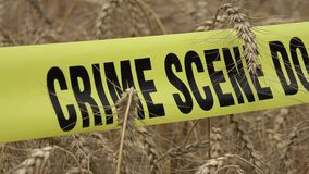 Il grano e la scena del crimine non attraversano video d archivio