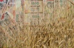 Il grano ed i soldi indiani o la valuta nel colpo della doppia esposizione, un concetto per i guadagni o spendono nell'agricoltur Immagini Stock Libere da Diritti
