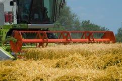 Il grano maturo di raccolto meccanico della mietitrebbiatrice pota nel campo agricolo coltivato Fotografia Stock Libera da Diritti