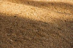 Il grano raccolto ha venduto al punto dell'acquisto del grano in Polonia Fotografia Stock Libera da Diritti