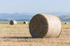 Il grano rotola sul campo dell'agricoltura fotografia stock