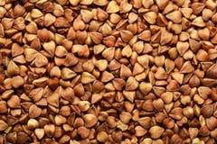 il grano Sun-acceso del grano saraceno semina il primo piano Fotografia Stock Libera da Diritti