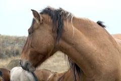 Il gregge dei cavalli in autunno sul pascolo, pascente i cavalli Fotografie Stock Libere da Diritti
