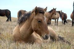 Il gregge dei cavalli in autunno sul pascolo, pascente i cavalli Immagini Stock Libere da Diritti