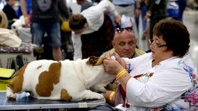 Il Groomer prepara il cane alla manifestazione archivi video