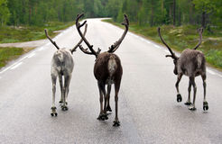 Il gruppo che cammina su una strada Fotografie Stock