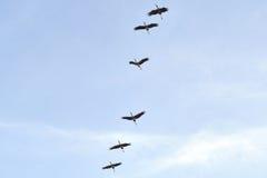 Il gruppo degli uccelli in cielo blu Fotografia Stock