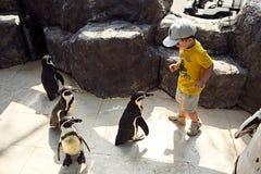 Il gruppo dei pinguini attacca il piccolo ragazzo sveglio per portare via la lecca-lecca fotografia stock libera da diritti