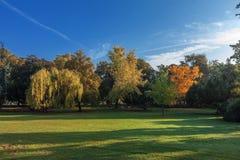 Il gruppo di alberi nel parco durante la stagione di caduta Immagini Stock Libere da Diritti