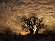 Il gruppo di alberi su un fondo del tramonto si appanna Fotografia Stock