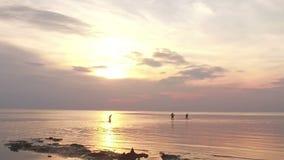 Il gruppo di amici che nuotano nel mare al tramonto che si imbatte nell'acqua che ottiene bagnata e che fa spruzza stock footage