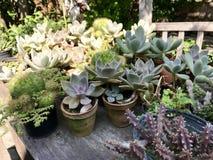 Il gruppo di cactus Fotografie Stock Libere da Diritti