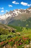 Il gruppo di Mischabel in alpi svizzere Fotografia Stock Libera da Diritti