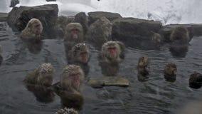 Il gruppo di neve monkeys il rilassamento in una sorgente calda naturale, Jigokudani, Nagano, Giappone stock footage