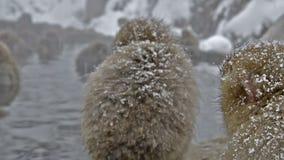 Il gruppo di neve monkeys il rilassamento in una sorgente calda naturale, Jigokudani, Nagano, Giappone video d archivio