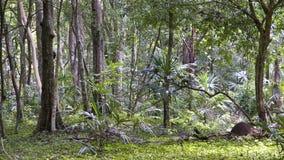Il Guatemala - giungla Fotografie Stock