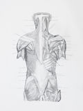 Il hunam posteriore muscles il disegno a matita Fotografia Stock