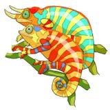 Il illustrat esotico di vettore del rettile della donna maschio del camaleonte delle coppie Immagine Stock