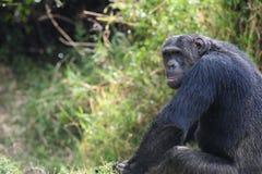 Il Kenya Fotografia Stock