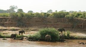 Il Kenya, Tsavo orientale - elefanti nella loro riserva immagini stock
