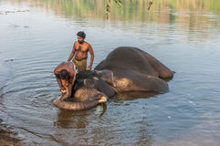 Il KERALA, INDIA - il 12 gennaio: Elefante che bagna al trainin di Kodanad Immagini Stock Libere da Diritti